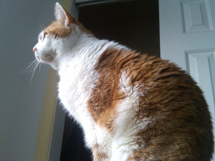 Uchikoshi's cat, Molly, stares out the window.
